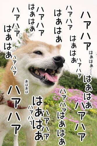 DESTINY JP(検索用 まりりん) プロフ画像