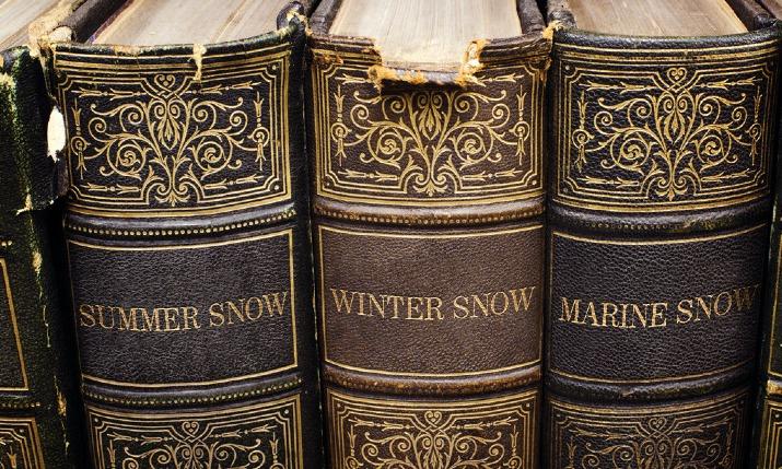 Marine Snow プロフ画像