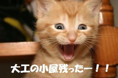 猫好き博士 プロフ画像